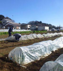ユギムラ体験市民農園。苗と作ったり、種を蒔いたり、草取りをしたりと、仕事は年間を通して